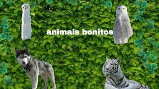 Os 4 animais mais bonito