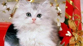 ВИДЕО Смешные Кошки - ТОПовая Подборка Котов