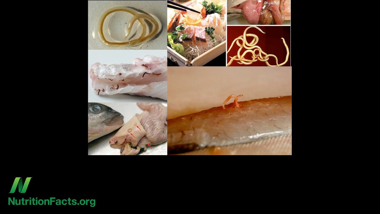 Allergenic Fish Worms