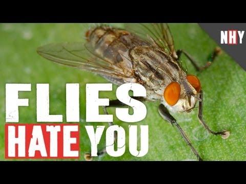 FLIES HATE YOU