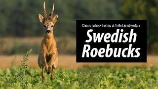 Swedish Roebucks