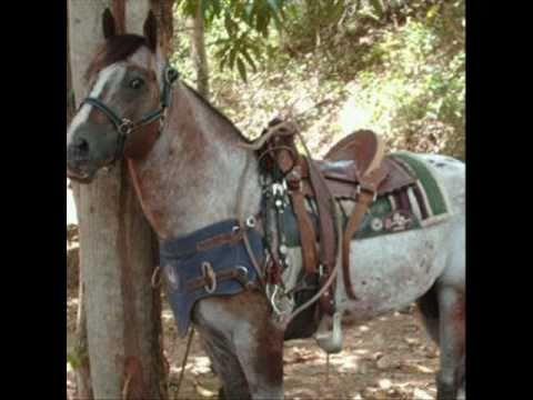 El Guasón...El caballo record en el 2010.