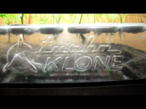 Turbo Klone 48 Site Aeroponic Cloner in Action! -  Hydroponics in San Diego