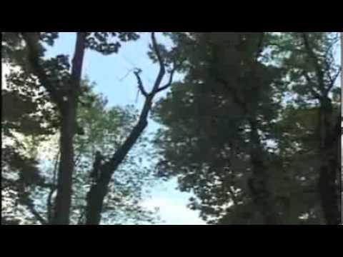 Lamberts Tree Service
