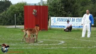 2015 - Championnat Ring Dom-Tom Domérat - Gabin dit G'Zonn des Plaines de Cuges - Rodrigue Latchman