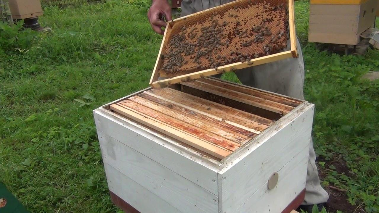 Как сделать матку для пчел 3