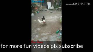 Cock Fight most funny video