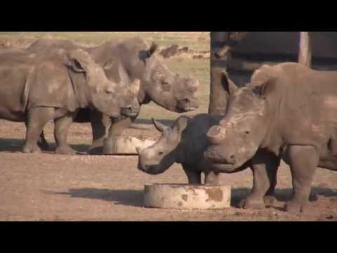 Saving Rhinos in South Africa