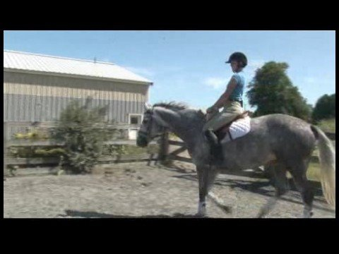 Horse Care & Riding : How to Trot Your Horse