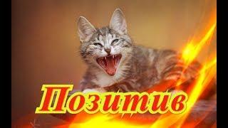 Приколы с животными Кошки Собаки Fanny animals Создай себе хорошее настроение