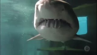 Repórter desafia o perigo e mergulha com tubarões na Austrália