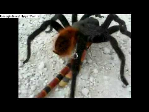 Spider vs Small snake