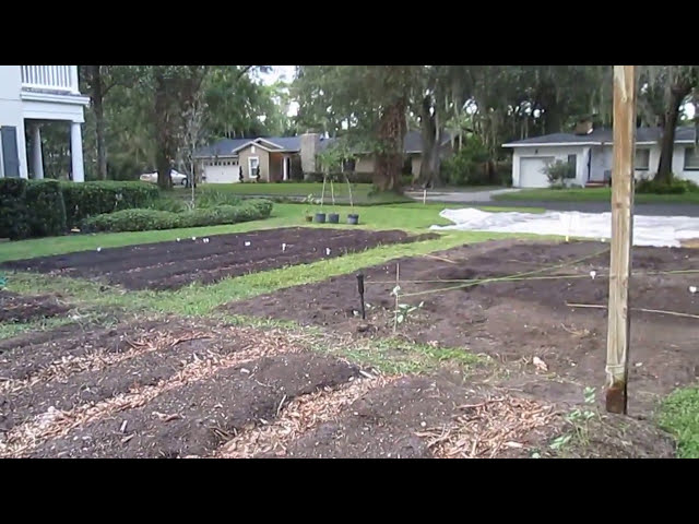 Permaculture plants at Winter Park Urban Farm with Tia
