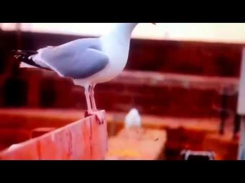 Danny Macaskill - way Back Home video