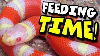 SNAKE FEEDING TIPS AND BABY SNAKES! Brian Barczyk