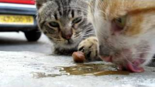Rescuing cats in Israel - please share and help us save more lives.  Thanks!