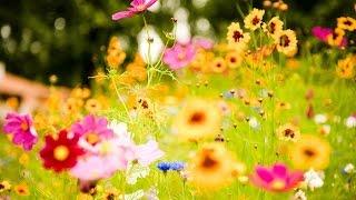 Allah Allah diye zikreden çiçekler. Sesli Kıssalar 1