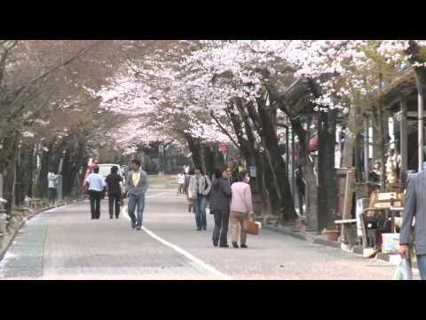 揖斐川町 「谷汲山華厳寺」 ~参道の桜~