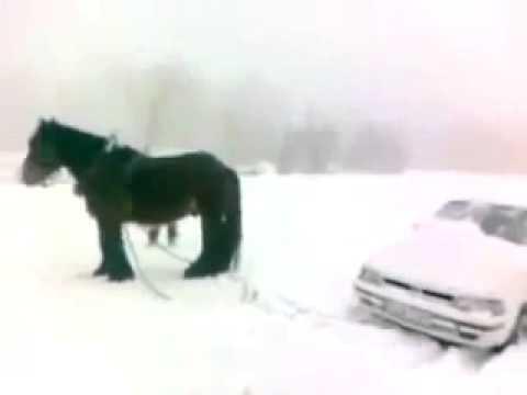 Как выглядит одна лошадиная сила, Новые Приколы, Шутки, Смешные ролики Юмор! Прикол! Смех