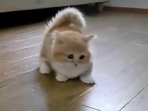 Котёнок по имени Гав. Милый и забавный )