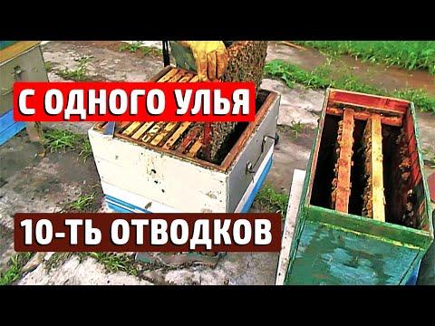 Как в августе сделать отводок пчел 898