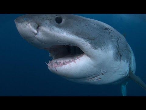 Акула Субмарина. Нападение акул