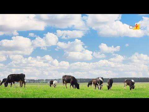Clique e veja o vídeo Curso a Distância Pastejo Rotacionado