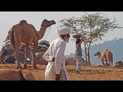 India Rajasthan Travel video
