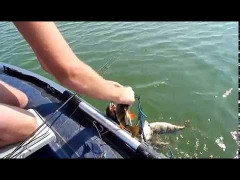 какая рыба клюет на маныче