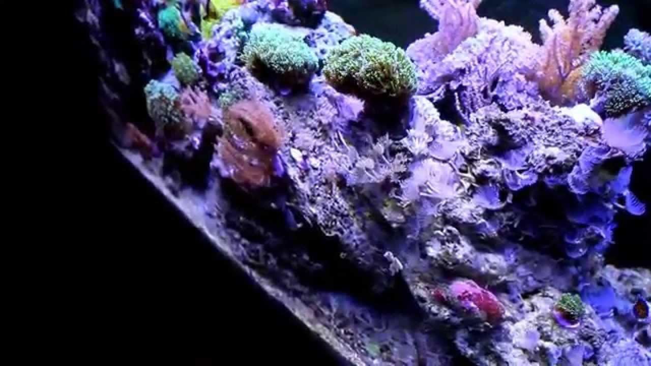 led meerwasser aquarium beleuchtung 1w high power. Black Bedroom Furniture Sets. Home Design Ideas