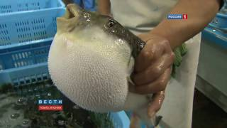 Fish says Allah 2016miracle of Allah