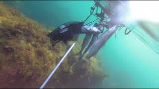 Подводная охота на пеленгаса