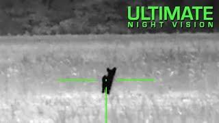 ATN ThOR 640 2.25X - Thermal Night Hunt - 2 Coyotes