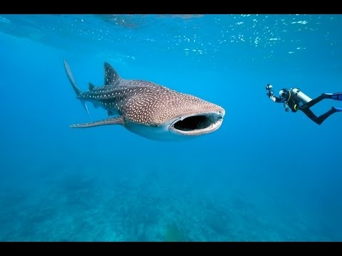 Best Scuba Diving Holiday Locations: Scuba Dive in the Maldives!!!