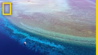Explore One of the Most Pristine Coral Reefs in the World   National Geographic