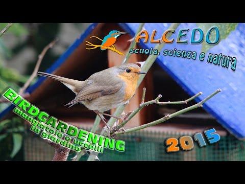 Birdgardening - mangiatoie e uccelli in giardino
