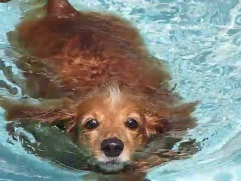 Buffy - Fun day in the Pool!