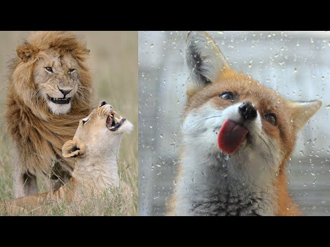 Highlights of Animals - VERY FUNNY ANIMALS
