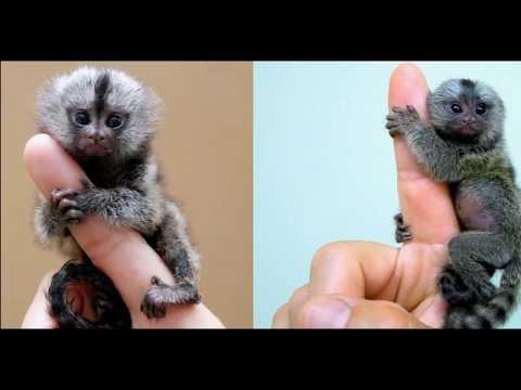 ТОП ПРО Топ 5 самое маленькое животное в мире
