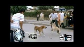 Wo Suna Hai Kuttay Ki Mout Margaya - Living On The Edge