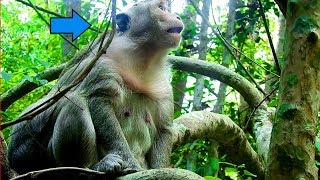 This Is the Real Buddy Baby's Mommy | She Is Staying In Deep Jungle  Not Strong and Good Health