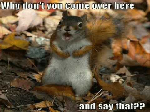 Very Funny Animals 3