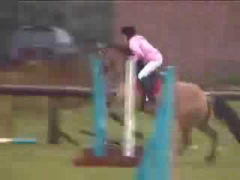funny horse fall