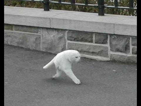 Las 50 imágenes más raras y curiosas de Google Street View
