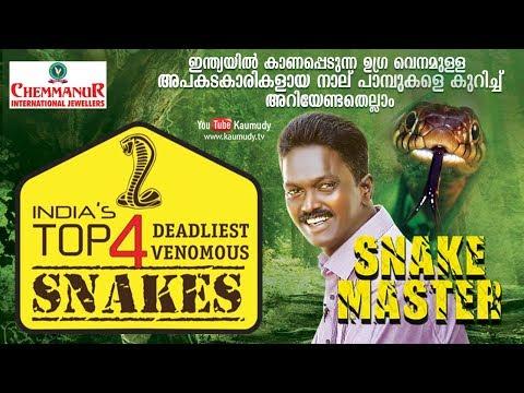 Wow! India's Top 4 deadliest Venomous Snakes | Snakemaster | Vava Suresh | EP 376