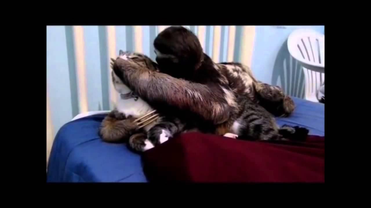 Battle Cats Sloth