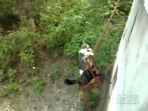 Casero - Ascensor para gatos