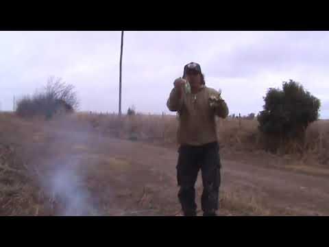 caceria de liebres con galgos carcaraña parte 4
