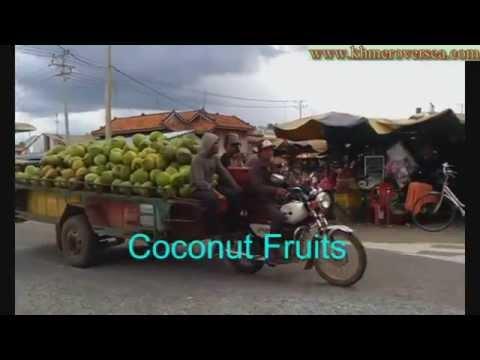 Cambodia Khmer Phnom Penh Coconut Fruits Cambodian RFA News