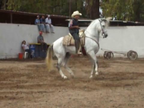 caballo bailador del guacho jose, cocorit sonora